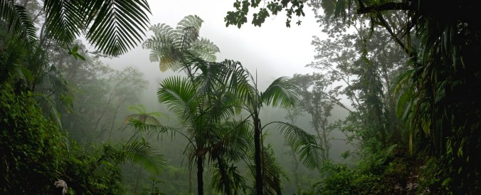 tropical-rainforest-jungle